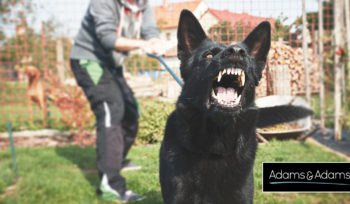 DOG BITE COURT CASES GAINING MOMENTUM GENERAL LEGALITIES